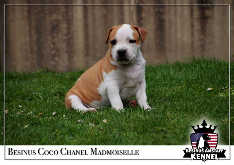 Besinus Coco Chanel Madmoiselle